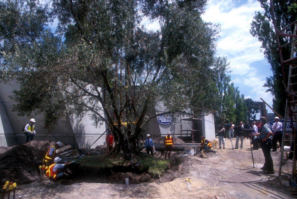shrine of remembrance tree transplanting - ETT - 1
