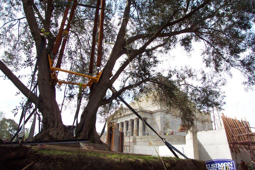 shrine of remembrance tree transplanting - ETT - 4