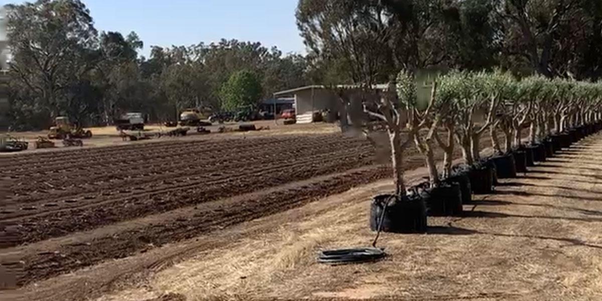 Echuca nursery soon to roll-out 1000 Pot-in-Pot trees
