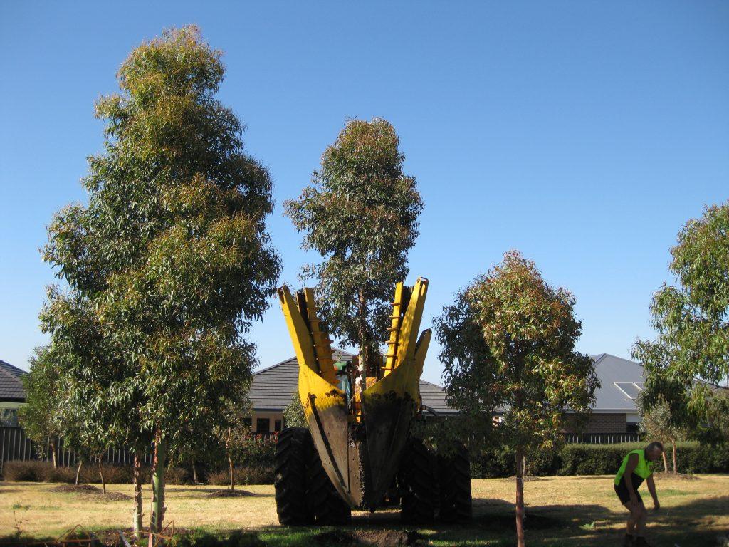 transplanting trees craigieburn melbourne - ETT - 1
