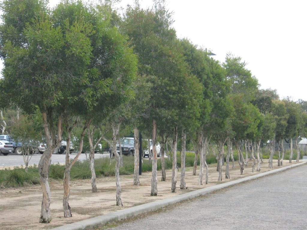 Royal Botanic Gardens Cranbourne - ETT - 3