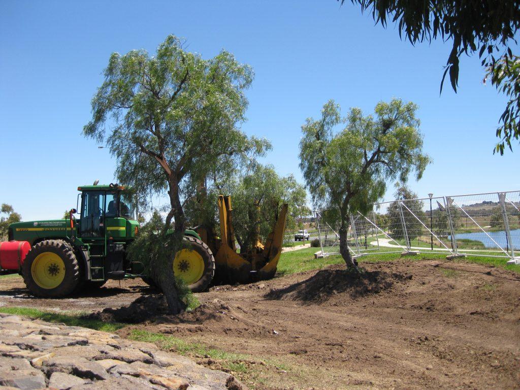 transplanting trees craigieburn melbourne - ETT - 3