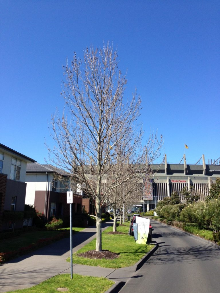 Waverley Park established tree planting - 7