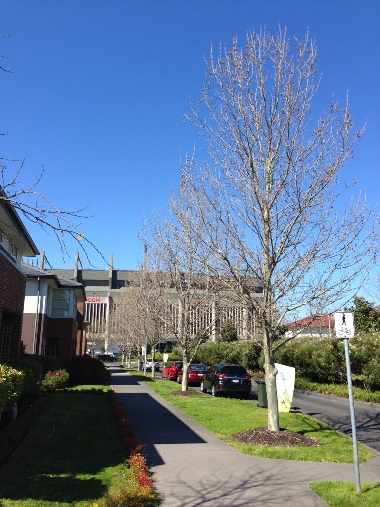 Waverley Park established tree planting - 8