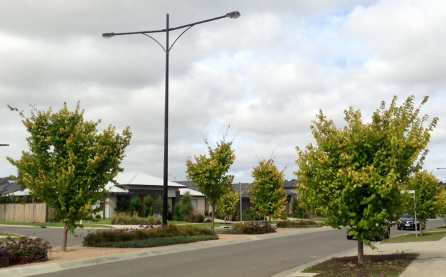 warralily geelong established trees - 3