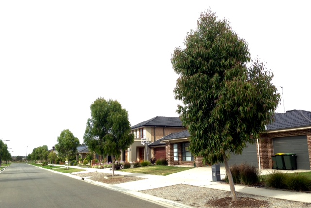 warralily geelong established trees - 4