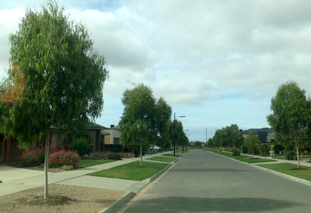 warralily geelong established trees - 5