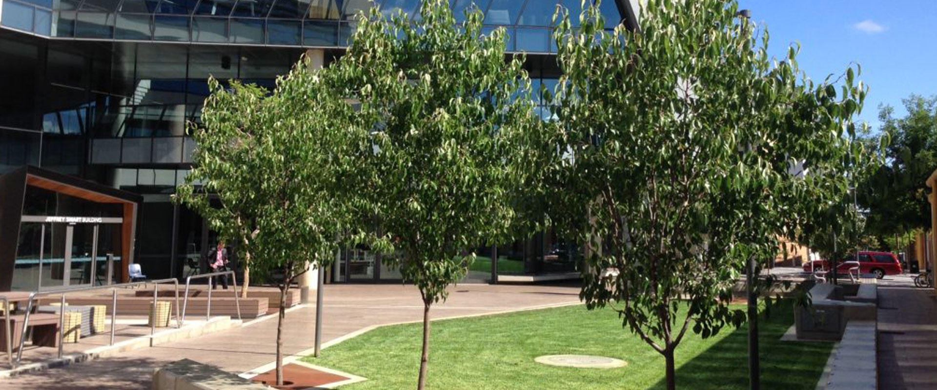 Adelaide City Council Established Tree Planting