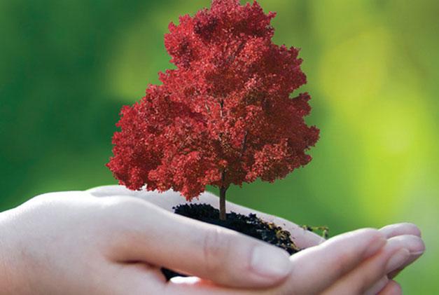 established trees assurance