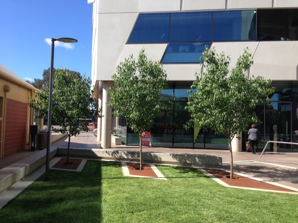 Adelaide City Council Established Tree Planting - 3