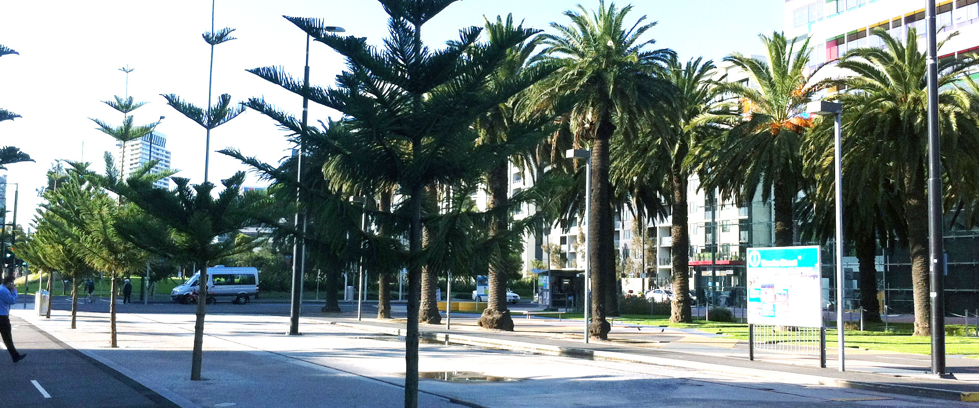 docklands established tree planting ett
