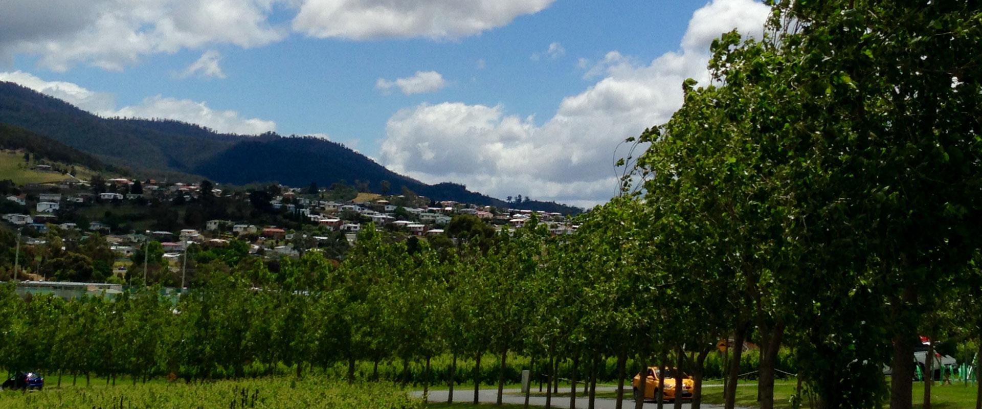 tasmania museum tree planting